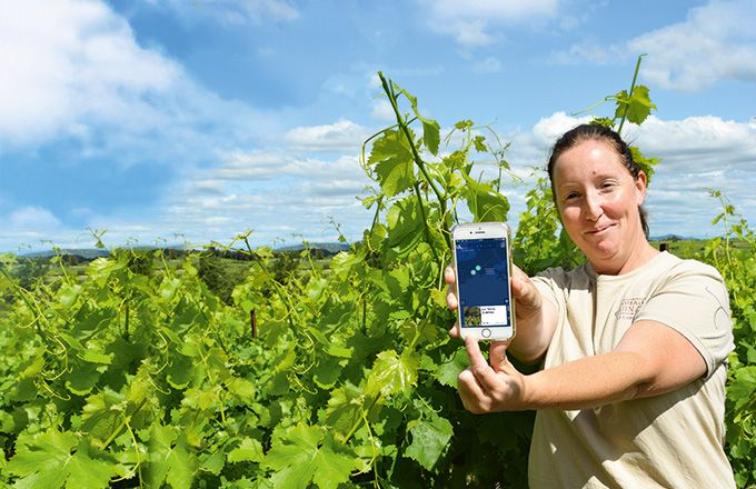 Sophie Guinand, Domaine Guinand